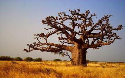 польза дерева 8