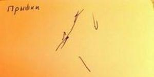 Регистрация колебаний пола во время прыжков с помощью самодельного сейсмографа