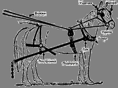 из чего состоит сбруя вооруженного конника