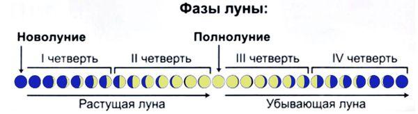 Фазы Луны - четверти