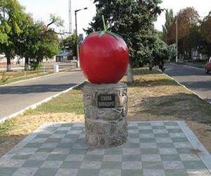 томат 33