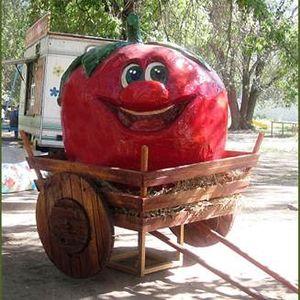 томат 35