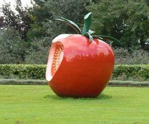 томат 38
