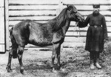 История возникновения лошадей