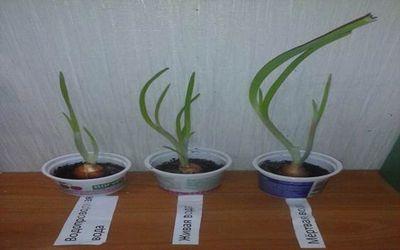 влияние воды на рост