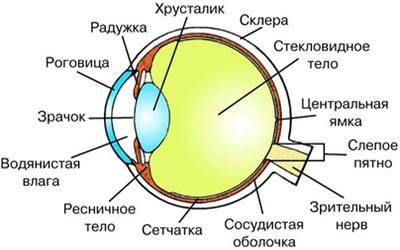 зрение и глаза 1